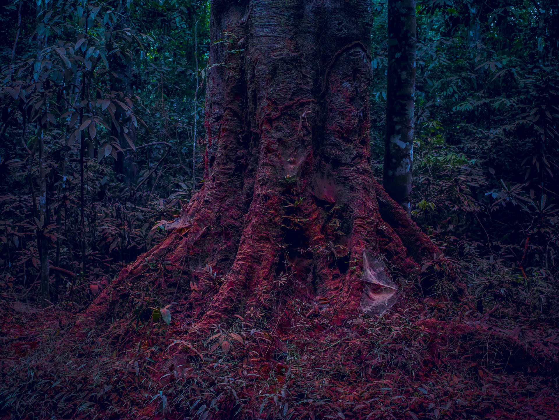 RED FOREST SIGMA 8